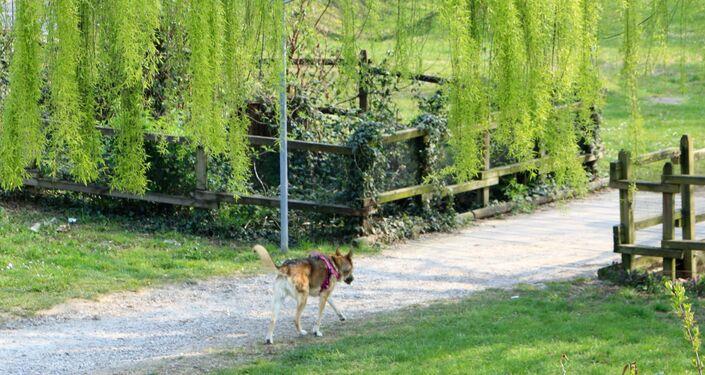 Un cane in un parco