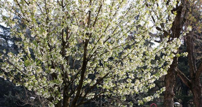 I fiori degli alberi in un parco di Milano