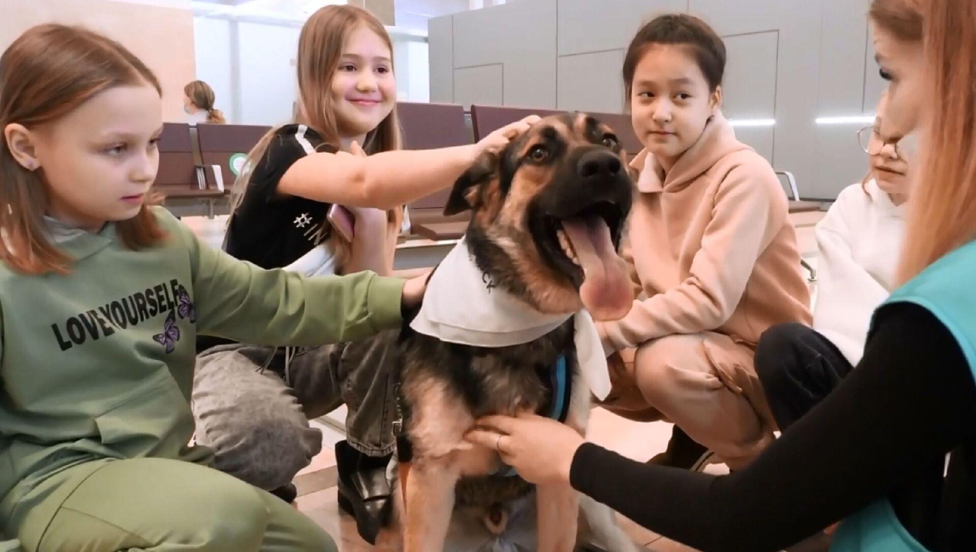 Caneterapia: in un aeroporto in Russia i cani aiutano i passeggeri a superare lo stress  - Sputnik Italia, 1920, 06.04.2021