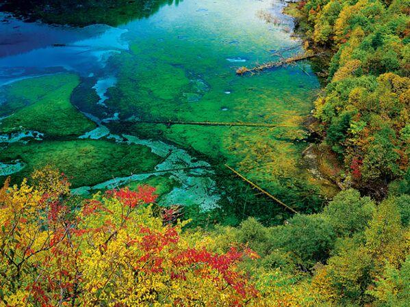 Con le sue acque cristalline e il suo rigoglioso scenario naturale, il Lago dei Cinque Fiori è uno dei luoghi più magici del pianeta. Questo paradiso si trova nel cuore della Cina, all'interno di una riserva protetta, e incanta per le sue meravigliose tonalità che variano dal turchese al verde intenso - Sputnik Italia