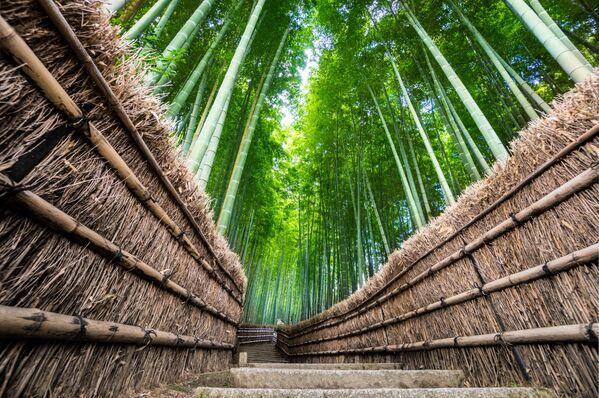 La foresta di bambù di Sagano, conosciuta per lo più come foresta di bambù di Arashiyama, è uno dei luoghi più suggestivi e fotografati del Giappone - Sputnik Italia