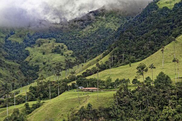 Riserva naturale della valle di Cocora in Colombia - Sputnik Italia