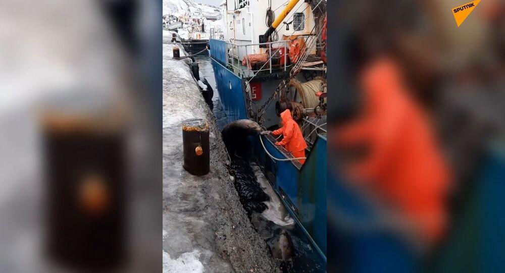 Che ne dici di una pausa pranzo? Leoni marini chiedono cibo ai pescatori nell'estremo oriente russo