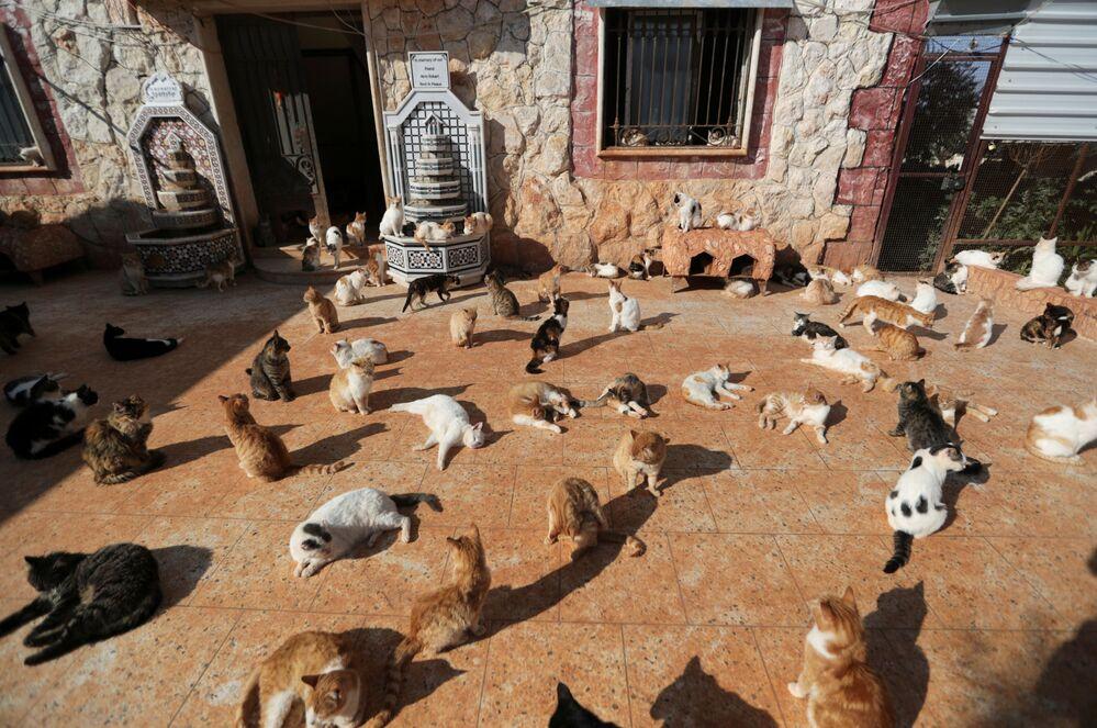 Santuario per gatti di Ernesto a Idlib, Siria, il 28 marzo 2021