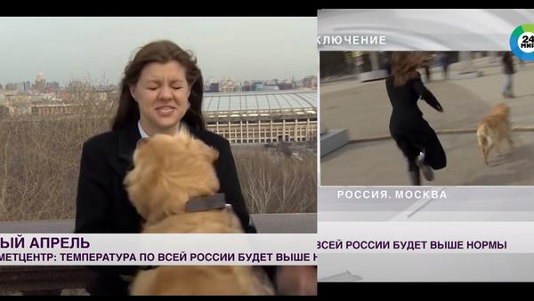 Cane ruba il microfono a una giornalista durante una trasmissione in diretta. - Sputnik Italia