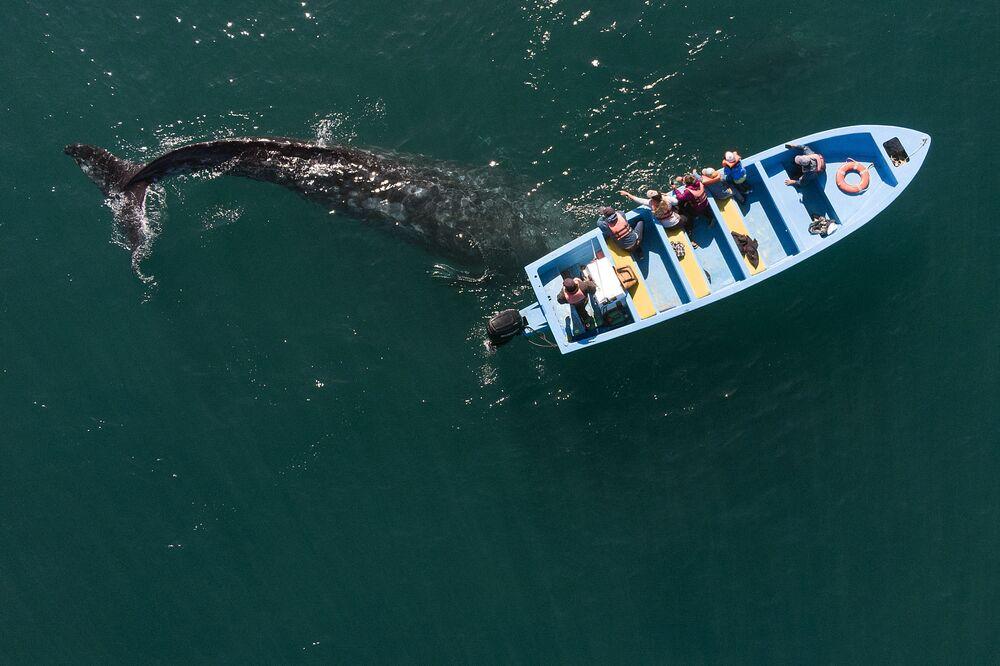 La ripresa aerea di una balena grigia vicino a una barca con i visitatori in Messico
