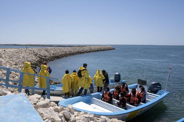 Il tour in barca per vedere le balene in Messico  - Sputnik Italia