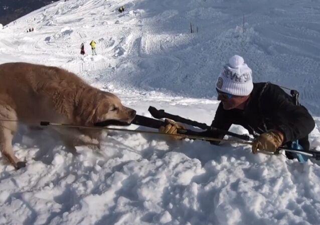Esperimento, blogger di YouTube sepolto in una grotta di neve e salvato da un cane