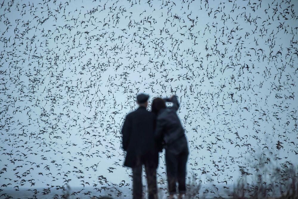 Una coppia che osserva gli uccelli migratori nella provincia di Liaoning, nel nord-est della Cina