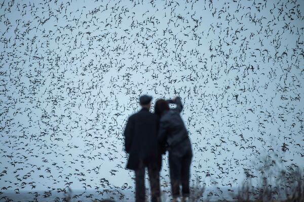 Una coppia che osserva gli uccelli migratori nella provincia di Liaoning, nel nord-est della Cina - Sputnik Italia