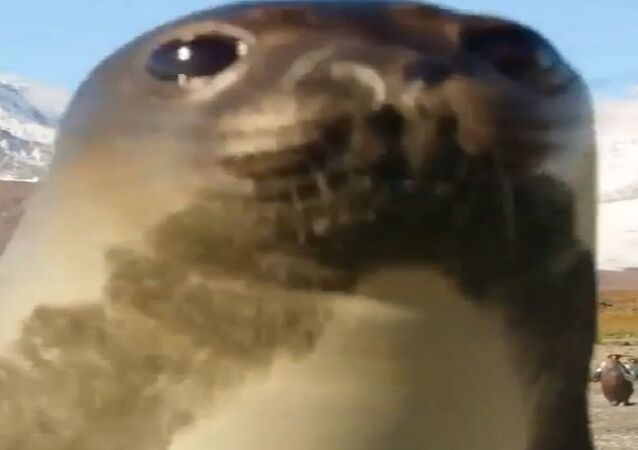 Una foca curiosa