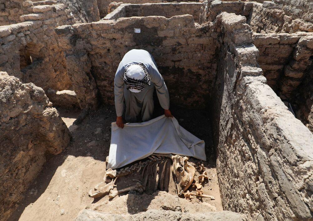 Un uomo guarda i resti scheletrici di animali alla Città d'oro perduta'', che è stata recentemente scoperta dagli archeologi, il 10 aprile 2021