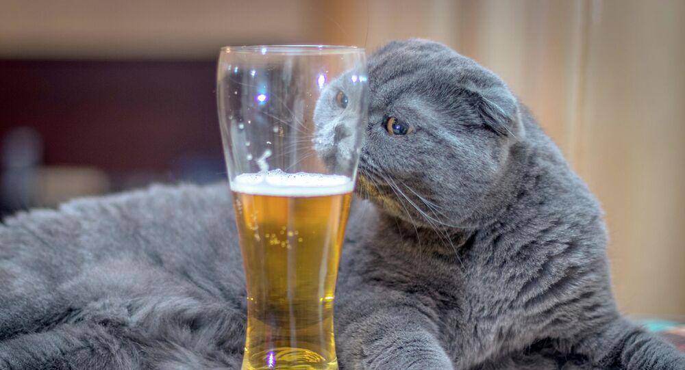 Il gatto con la birra