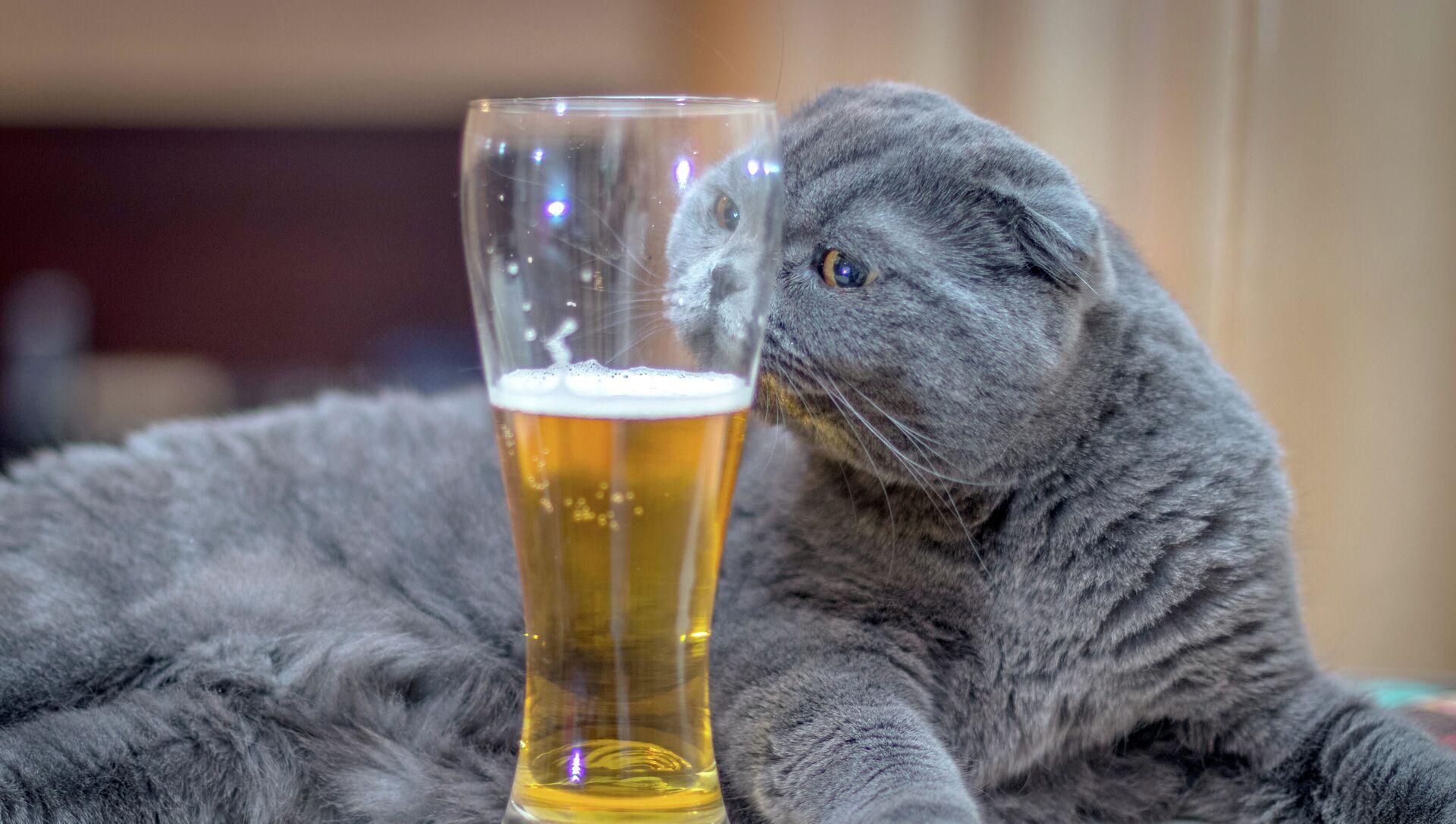 Il gatto con la birra - Sputnik Italia, 1920, 11.04.2021
