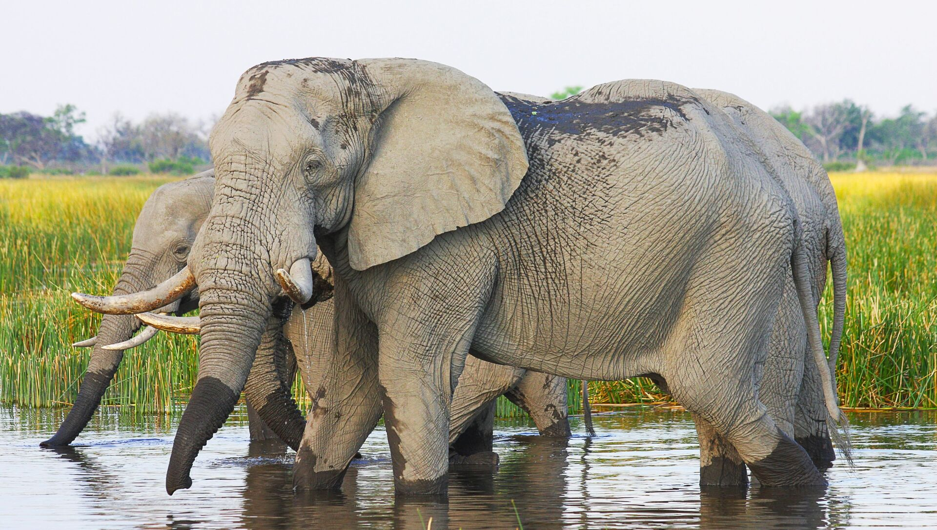 Elefanti africani - Sputnik Italia, 1920, 18.05.2021
