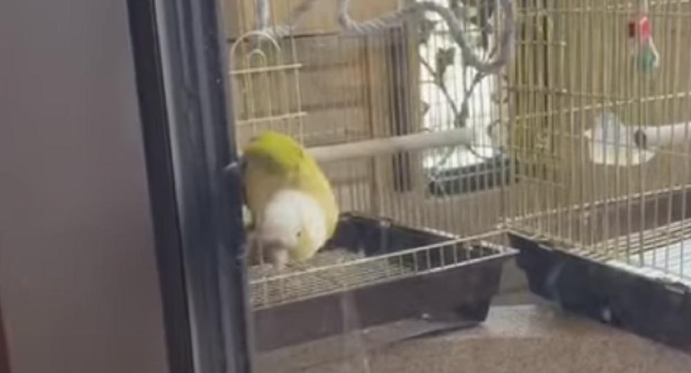 uccellino Taiwan