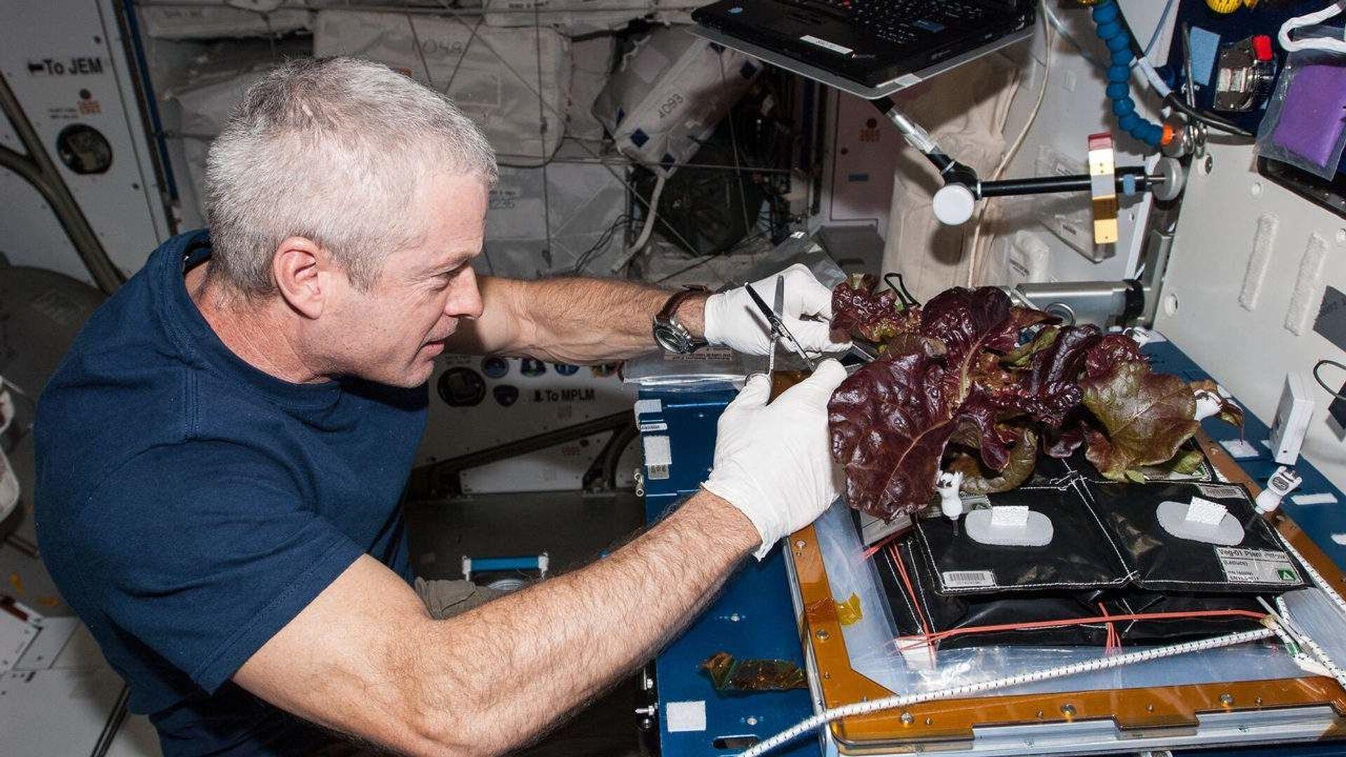 Американский астронавт Стивен Суонсон собирает выращенный на МКС салат  - Sputnik Italia, 1920, 22.06.2021