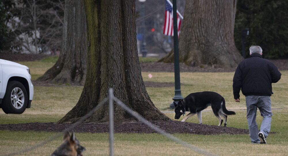 I cani di Biden Champ e Major