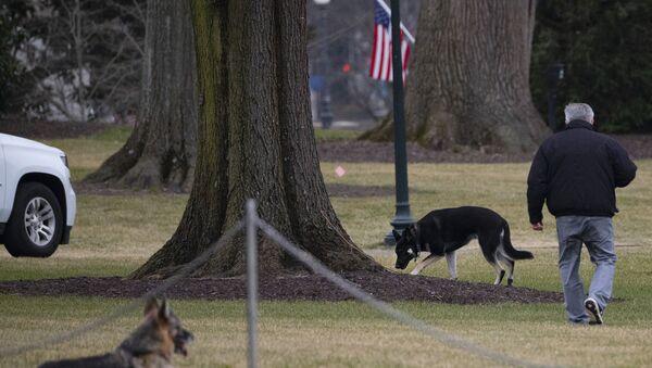 I cani di Biden Champ e Major - Sputnik Italia