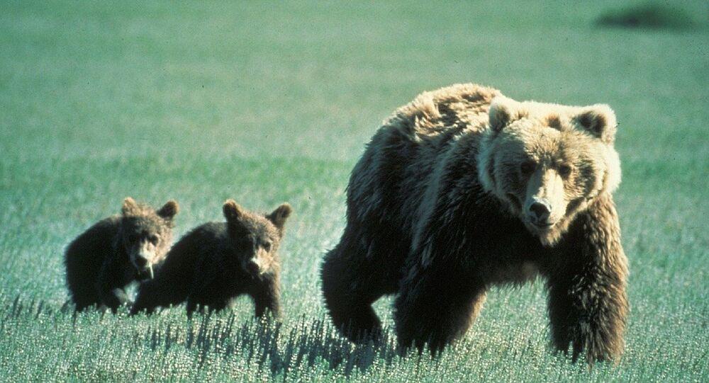 Mamma orsa con i suoi cuccioli