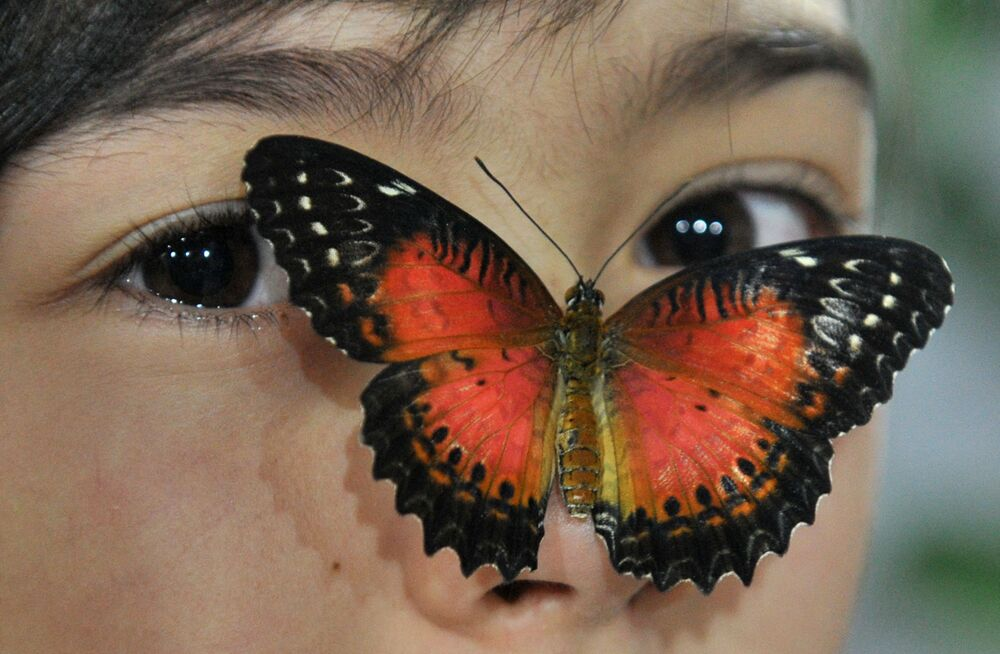 Una farfalla sul viso di una ragazza durante una mostra di farfalle a Bishkek, il 9 gennaio 2015