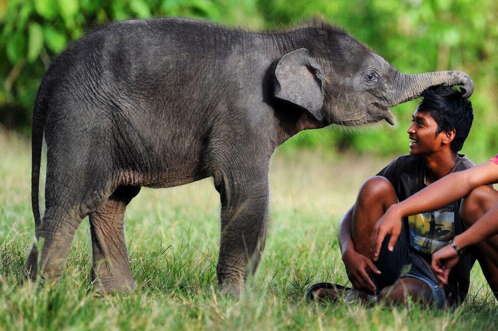 Un cucciolo di elefante di Sumatra presso l'area dell'ecosistema di Leuser nelle province di Aceh e Nord Sumatra