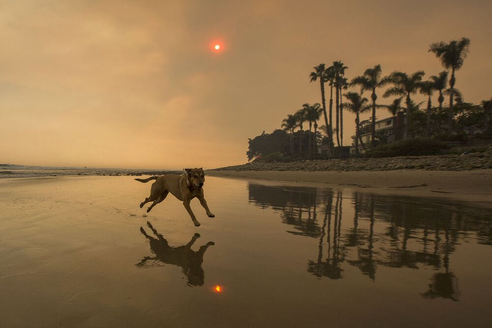 Un cane in spiaggia a Santa Barbara  in California, USA, il 12 dicembre 2017