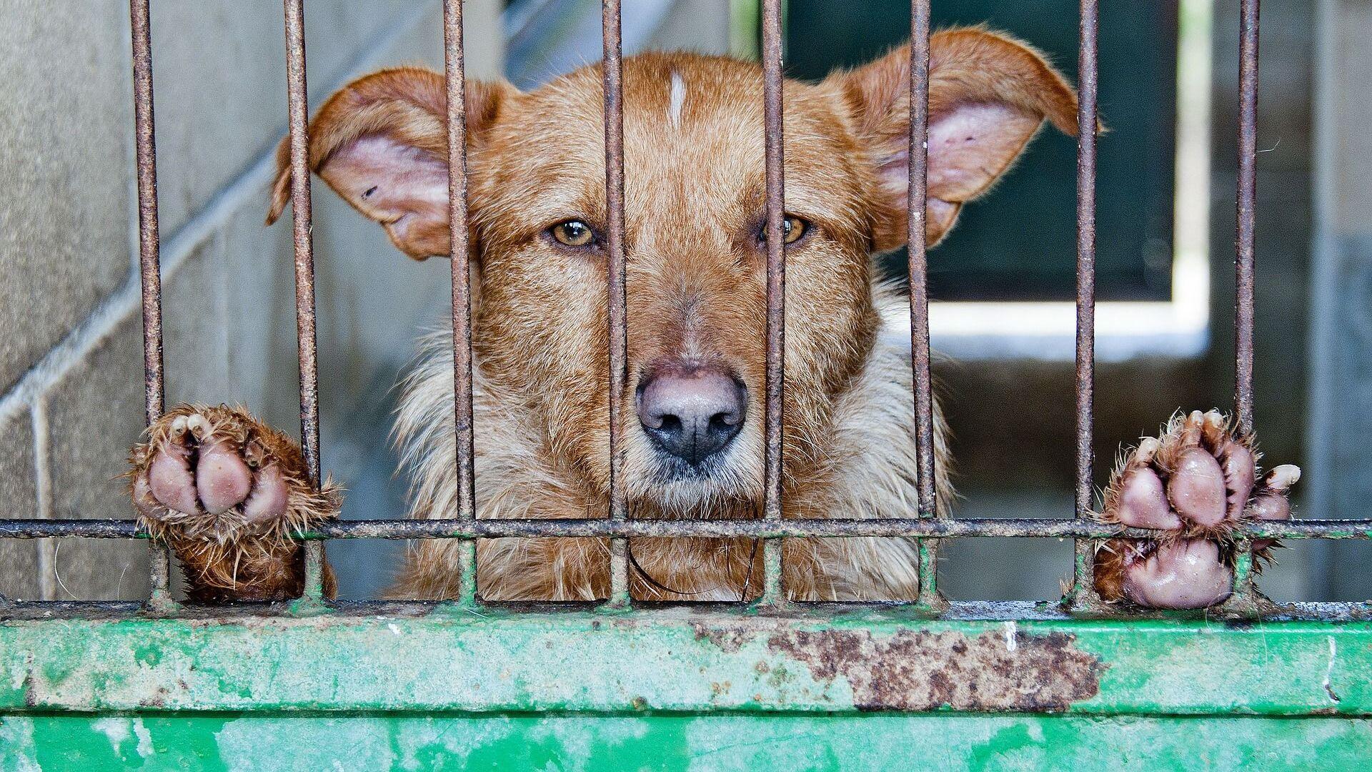 Una gabbia troppo piccola per un cane di grossa taglia? Non è molto sicuro - Video - Sputnik Italia, 1920, 22.04.2021
