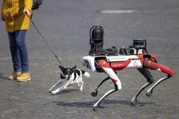 Il cane abbaia al Robot Spot, Erfurt, Germania, 20 aprile 2021.  - Sputnik Italia