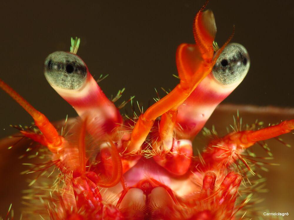 Granchio, la foto scattata sott'acqua nell' Area Marina Protetta Capo Milazzo