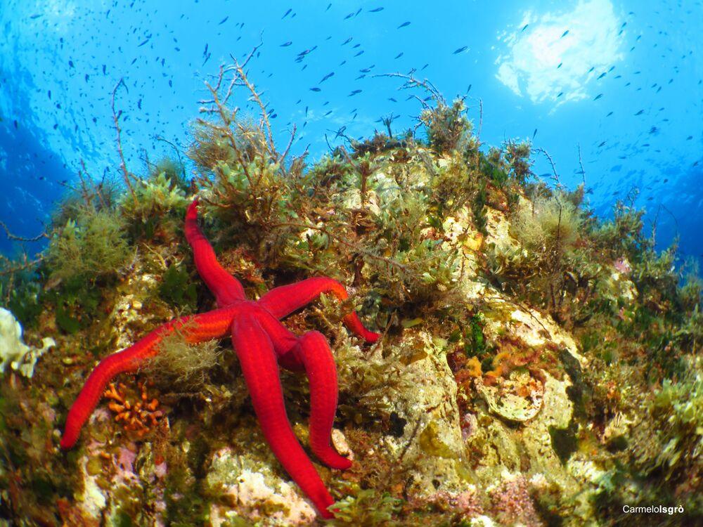 Stella marina, la foto scattata sott'acqua nell' Area Marina Protetta Capo Milazzo