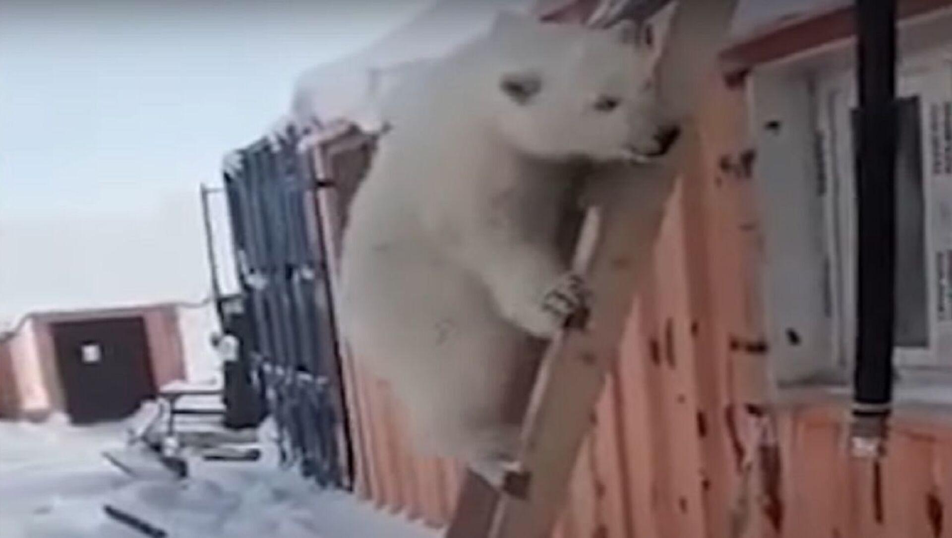 Un cucciolo di orso bianco - Sputnik Italia, 1920, 25.04.2021