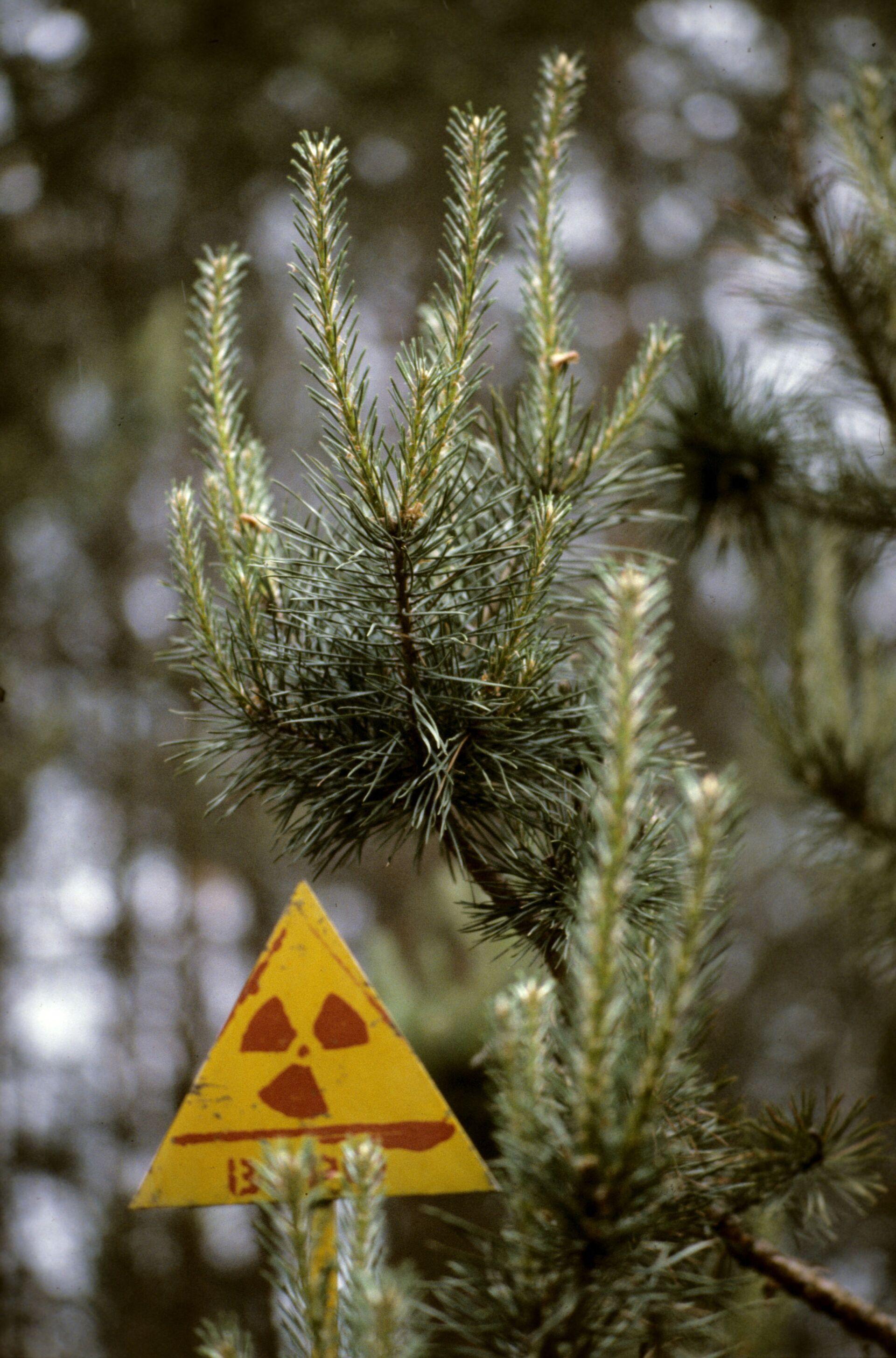 Bosco radioattivo nei pressi di Chernobyl - Sputnik Italia, 1920, 18.05.2021