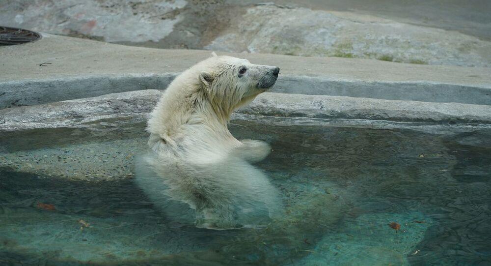 A Mosca accudito cucciolo di orso salvato in Siberia