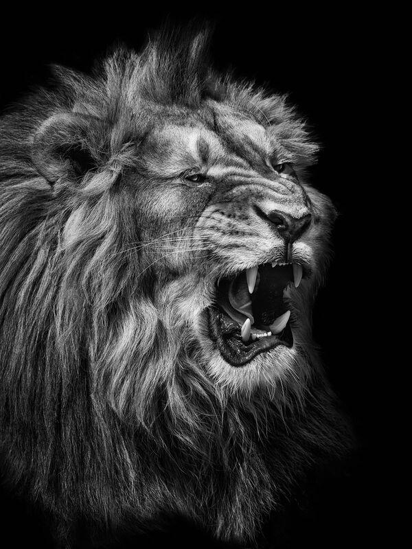 Il leone nella foto del fotografo russo Mikhail Kirakosyan Vi assomigliamo, i cui eroi sono gli animali dello zoo di Mosca - Sputnik Italia