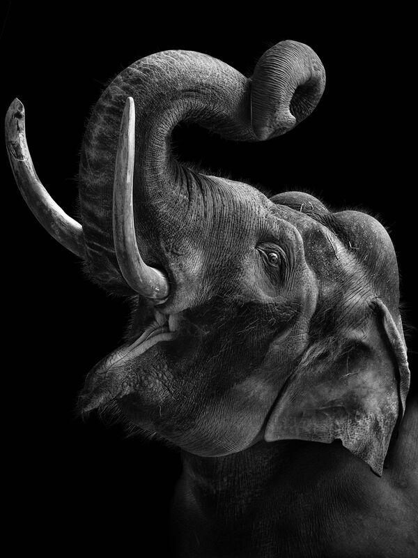 L'elefante nella foto del fotografo russo Mikhail Kirakosyan Vi assomigliamo, i cui eroi sono gli animali dello zoo di Mosca - Sputnik Italia