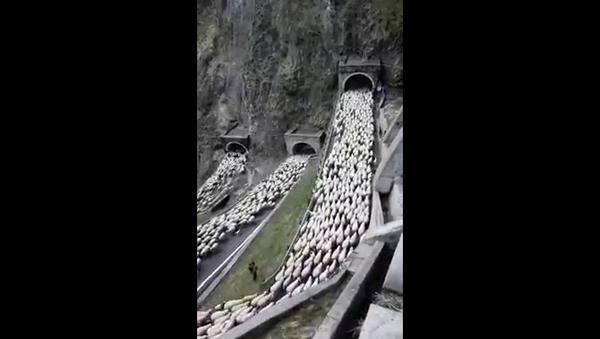 Luca Zaia parla della spettacolare transumanza a Passo San Boldo - Sputnik Italia
