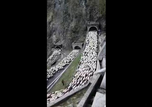 Luca Zaia parla della spettacolare transumanza a Passo San Boldo
