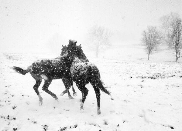 La foto Gioco dei cavalli, della fotografa italiana Alessandra Manzotti, vincitrice nella categoria Bianco e nero della decima edizione del concorso fotografico Mobile Photography Awards - Sputnik Italia