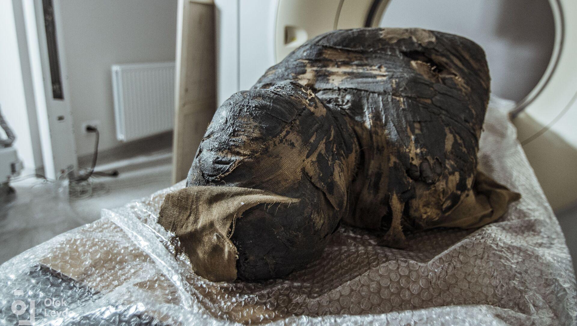 L'esame radiologico di un'antica mummia rinvenuta nelle tombe reali dell'Alto Egitto ha dimostrato che si tratta del corpo di una donna incinta. - Sputnik Italia, 1920, 11.05.2021