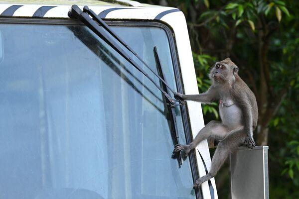 Una scimmia seduta sulla macchina, Singapore - Sputnik Italia
