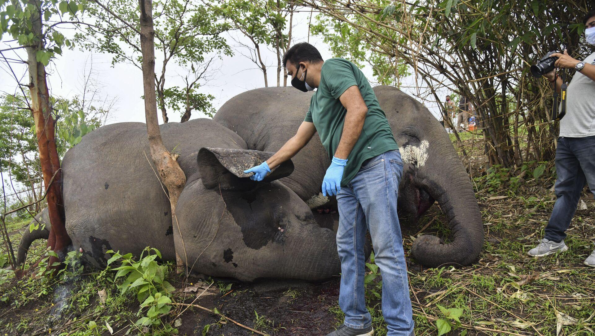 Elefanti morti nello Stato di Assam, India - Sputnik Italia, 1920, 14.05.2021