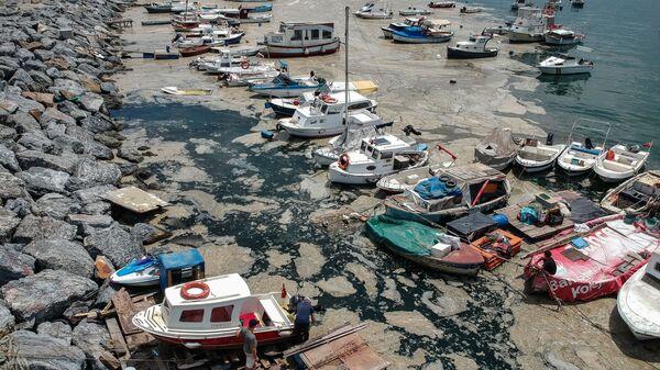Клейкий желеобразный слой слизи, который образуется на поверхности воды из-за чрезмерного распространения фитопланктона, серьезно угрожая морскому биому, Стамбул, Турция - Sputnik Italia