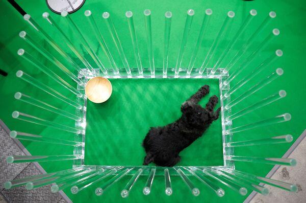 Alcuni cani non volevano divertirsi: la stanchezza è arrivata troppo rapidamente. - Sputnik Italia