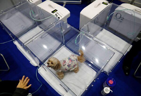 Alla mostra sono state presentate celle speciali con ossigeno. - Sputnik Italia