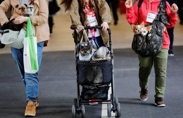 I giapponesi amano mettere i loro animali domestici nei passeggini. - Sputnik Italia