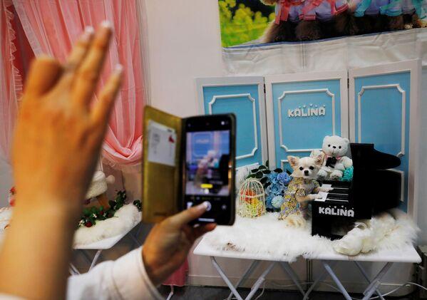 La mostra canina in Giappone ha anche attirato molte persone, che hanno pubblicato foto su Instagram. - Sputnik Italia
