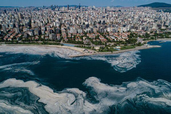 """""""Salveremo i nostri mari, in particolare il Mar di Marmara, da questo problema della mucillagine"""", l'agenzia riporta le parole di Erdogan durante una cerimonia a Istanbul in occasione della Giornata mondiale dell'ambiente. - Sputnik Italia"""