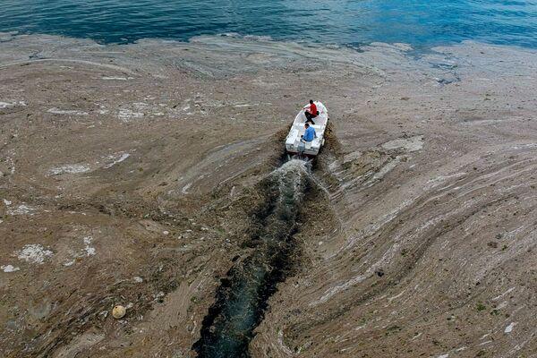 Il professore ha sottolineato che il livello di ossigeno nell'acqua marina è diminuito drasticamente e per questo motivo occorrono le misure urgenti. - Sputnik Italia
