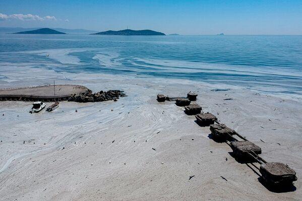 Salihoglu ha spiegato che le acque reflue non trattate, scaricate in mare dagli stabilimenti industriali, così come il deflusso dai fiumi, contribuiscono in modo significativo alla formazione del muco di mare. - Sputnik Italia